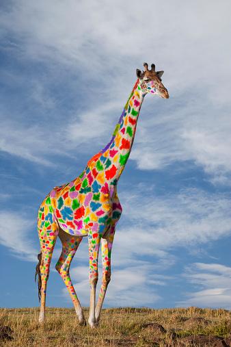 キリン「Giraffe with colorful spots」:スマホ壁紙(11)