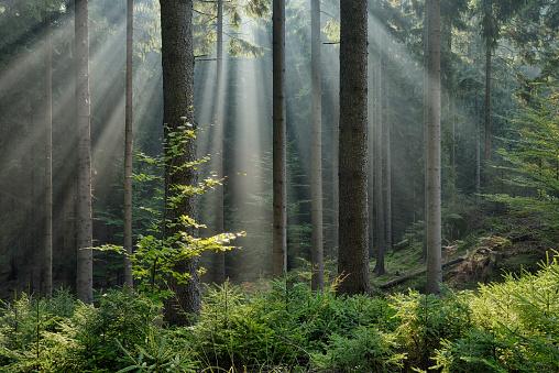 胸を打つ「Sunbeams through fog in Forest.」:スマホ壁紙(19)