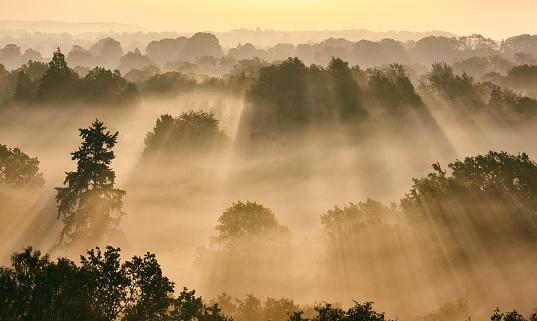 Four Seasons「Sunbeams Through Misty Trees At Dawn」:スマホ壁紙(11)