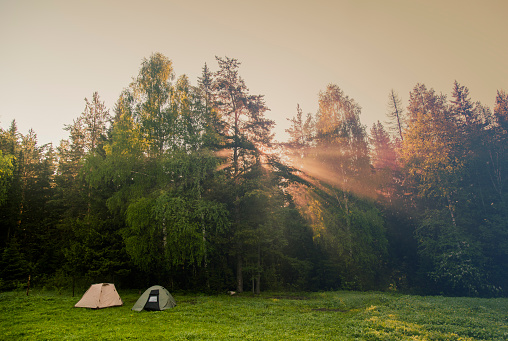 Hiking「Sunbeams through trees in rural field」:スマホ壁紙(16)