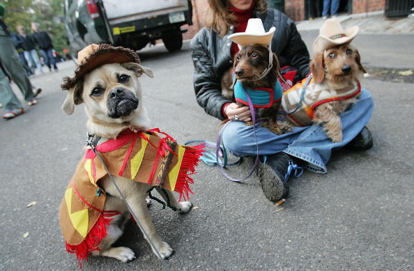 Pets「Masquerading Mutts March In Halloween Dog Parade」:写真・画像(7)[壁紙.com]