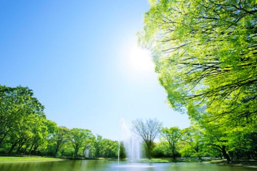 Public Park「Fountain at Yoyogi Park」:スマホ壁紙(15)