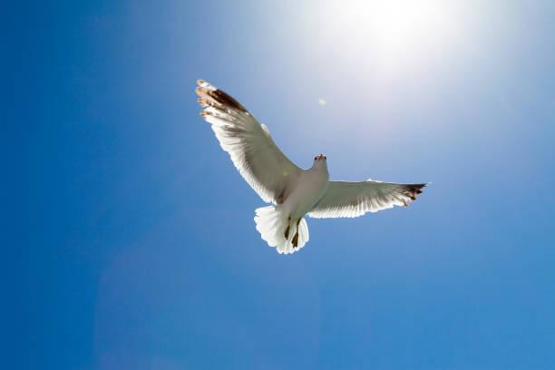 Seagull flaying:スマホ壁紙(壁紙.com)