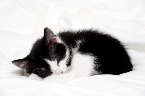 黒猫「A 9 week old kitten sleeping」:スマホ壁紙(18)
