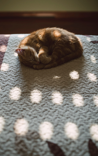 Kitten「Cat sleeping on a bed at home」:スマホ壁紙(11)