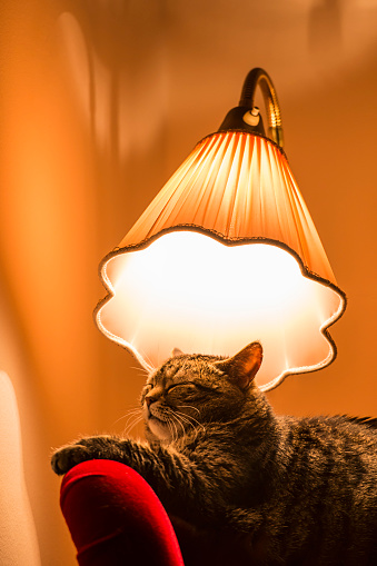 Lamp Shade「Cat sleeping under lamp」:スマホ壁紙(5)