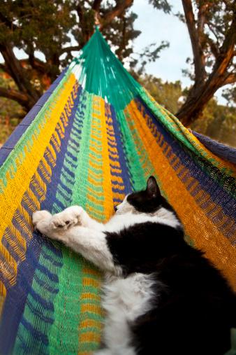 Hammock「Cat sleeping on Mexican hammock」:スマホ壁紙(11)