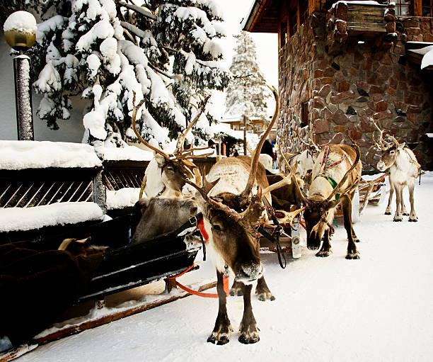 Reindeer Tours:スマホ壁紙(壁紙.com)