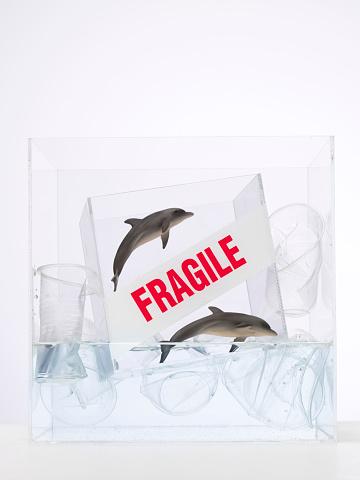 イルカ「Plastic dolphins trapped in-between plastic cups in water」:スマホ壁紙(16)