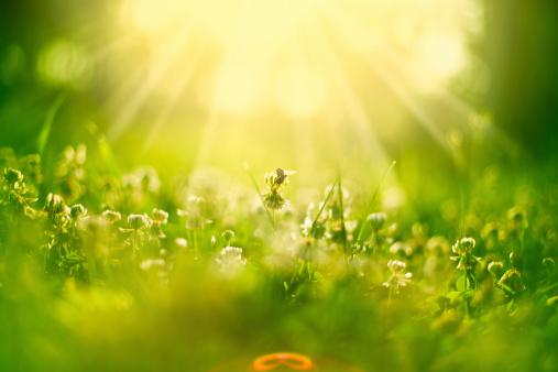 イースター「Honey bee の草地」:スマホ壁紙(18)