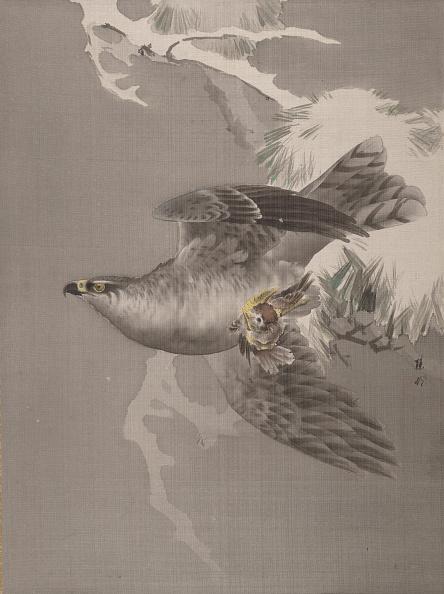 Animals Hunting「Hawk Holding A Small Bird」:写真・画像(3)[壁紙.com]