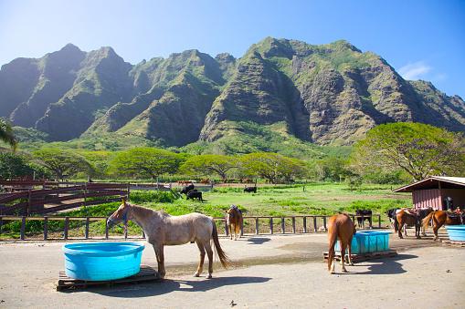 Horse「Ranch, Kualoa, Oahu, Hawaii」:スマホ壁紙(16)