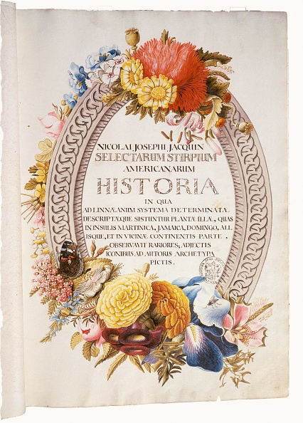 水彩画「Front page of 'Selectarum stirpium americanarum historia' by Nikolaus Joseph Jacquin, Water color painting, 1763」:写真・画像(3)[壁紙.com]