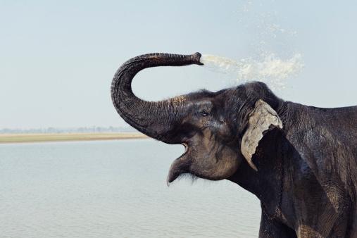 Elephant「インド象たバスルームには、インドのカルナタカ州」:スマホ壁紙(18)