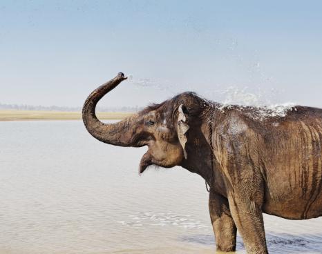 Elephant「インド象たバスルーム」:スマホ壁紙(17)