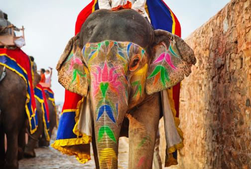 お祭り「インド、ジャイプールの象」:スマホ壁紙(11)
