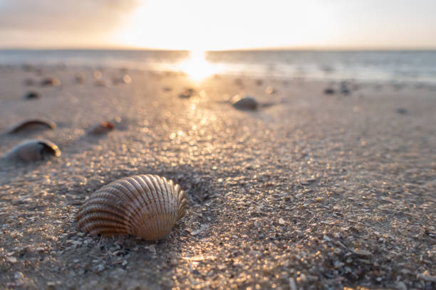 Germany, Lower Saxony, East Frisia, Langeoog, seashells on the beach at sunset:スマホ壁紙(壁紙.com)