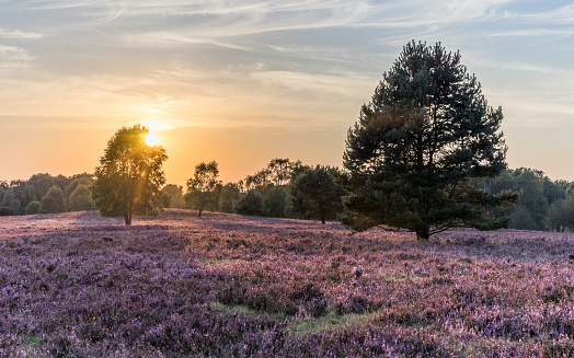 Nature Park「Germany, Lower Saxony, Heath district, Lueneburg Heath in the evening light」:スマホ壁紙(18)