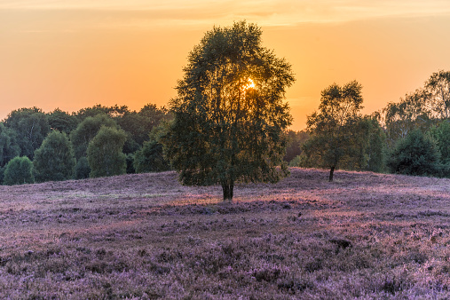 Nature Park「Germany, Lower Saxony, Heath district, Lueneburg Heath in the evening light」:スマホ壁紙(9)