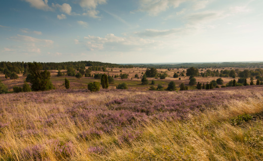 Nature Park「Germany, Lower Saxony, Lueneburg Heath」:スマホ壁紙(15)