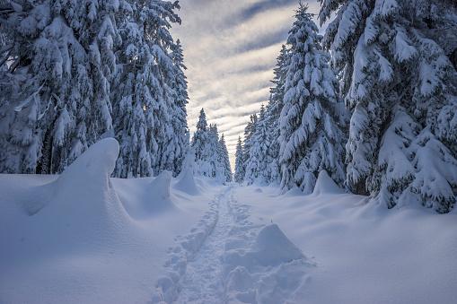 Lower Saxony「Germany, Lower Saxony, Harz National Park, winter landscape」:スマホ壁紙(17)