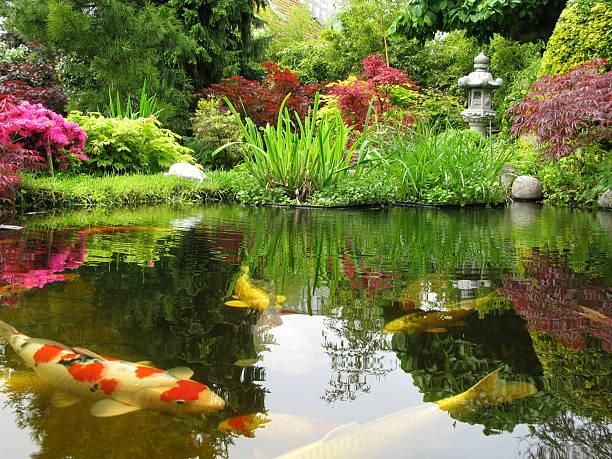 Big Kois in the pond:スマホ壁紙(壁紙.com)