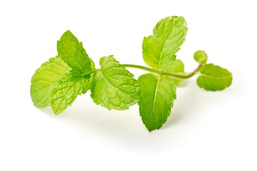 Spearmint「Sprig of fresh mint against white background」:スマホ壁紙(10)