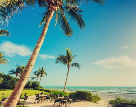 Miami「naple beach palms」:スマホ壁紙(18)