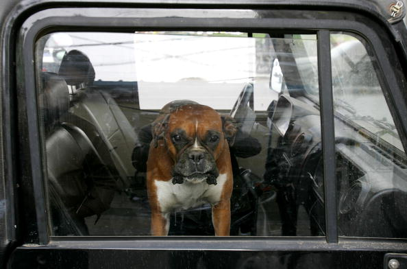 Car「Pet Economy Booms In China」:写真・画像(12)[壁紙.com]