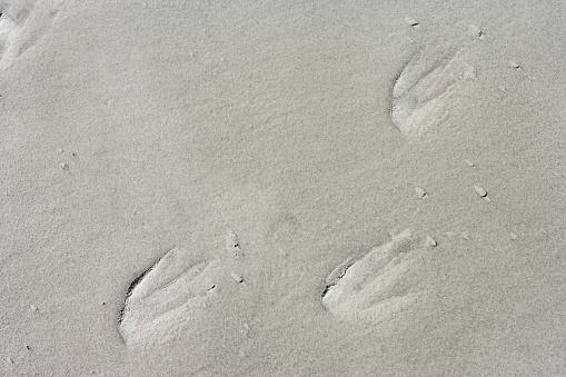 Falkland Islands「Penguin prints on sand」:スマホ壁紙(2)