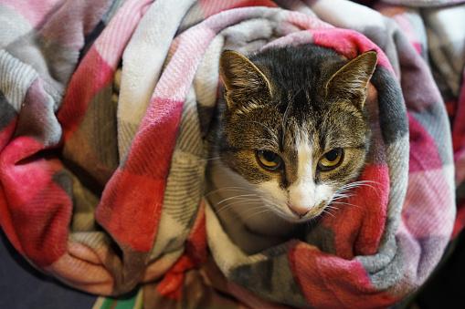 Tartan check「Living with Pets」:スマホ壁紙(3)