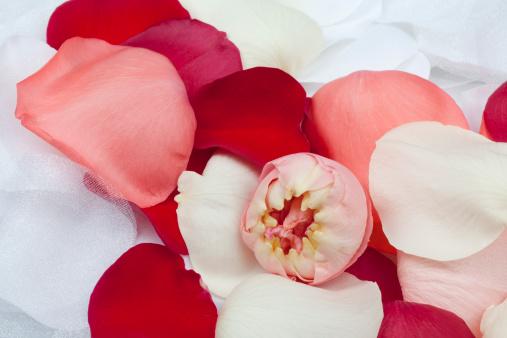 Pink「ホワイトの生地のフラワー、新鮮なバラの花びら、ウェディングの背景」:スマホ壁紙(6)
