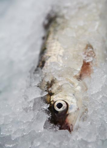 魚「freshly line caught fish on ice」:スマホ壁紙(16)