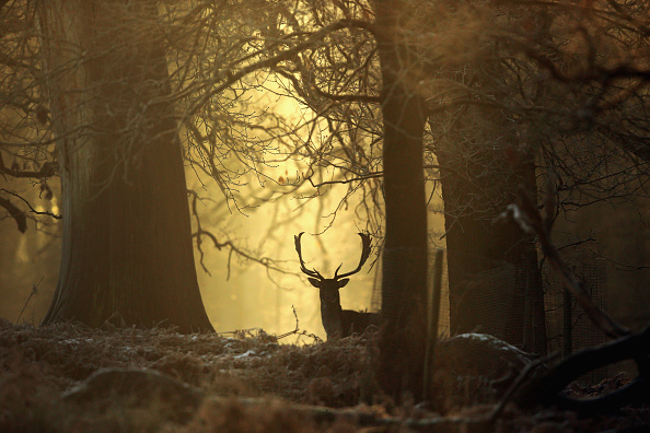 Woodland「Snow And Freezing Temperatures Hit UK」:写真・画像(5)[壁紙.com]