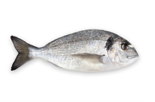 魚・熱帯魚「アクアの文化鯛(クリッピングパス)」:スマホ壁紙(2)