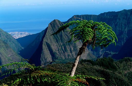 Reunion Island「Tree Fern and Mountains of Cirque de Salazie」:スマホ壁紙(8)
