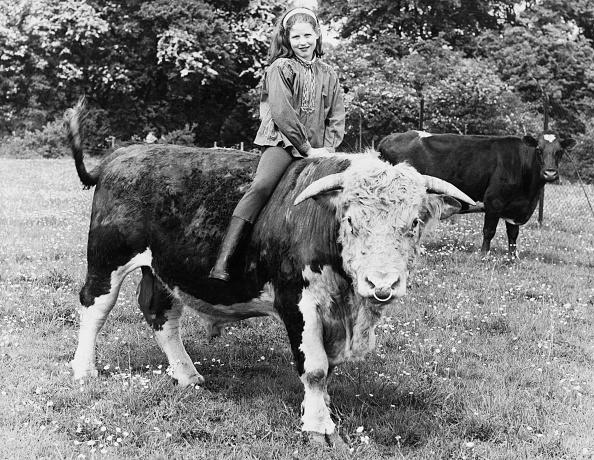Livestock「Girl Riding Hereford Bull」:写真・画像(15)[壁紙.com]