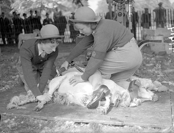 Land「Sheep Shearing」:写真・画像(5)[壁紙.com]