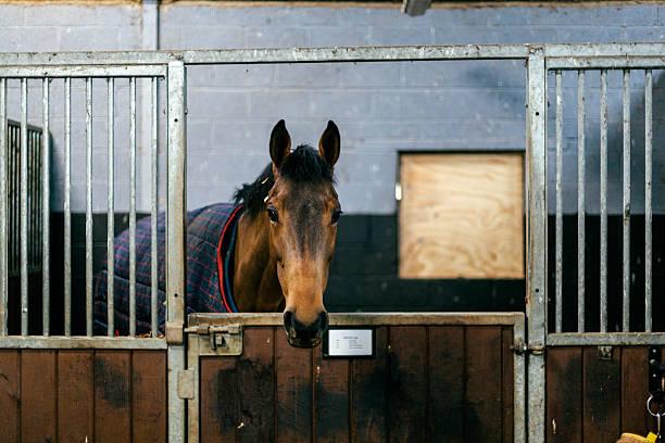 Racehorse in a stable:スマホ壁紙(壁紙.com)