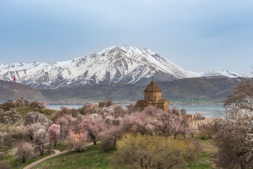 Akdamar Island「Akdamar church in spring, blossoming almond trees, Akdamar island, Lake Van, Eastern Turkey」:スマホ壁紙(14)