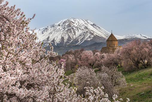 Akdamar Island「Akdamar church in spring, blossoming almond trees, Akdamar island, Lake Van, Eastern Turkey」:スマホ壁紙(9)