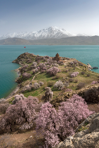 Akdamar Island「Akdamar church in spring, blossoming almond trees, Akdamar island, Lake Van, Eastern Turkey」:スマホ壁紙(2)