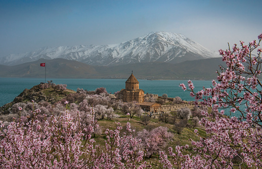 Akdamar Island「Akdamar church in spring, blossoming almond trees, Akdamar island, Lake Van, Eastern Turkey」:スマホ壁紙(15)