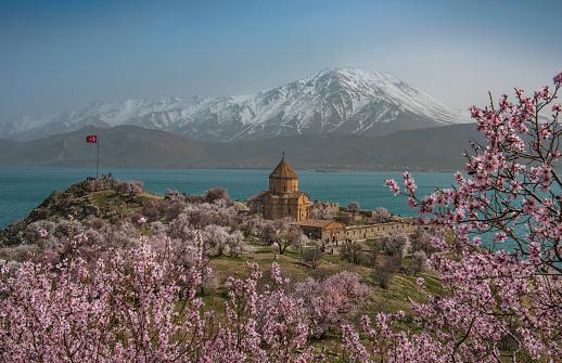 Akdamar Island「Akdamar church in spring, blossoming almond trees, Akdamar island, Lake Van, Eastern Turkey」:スマホ壁紙(13)
