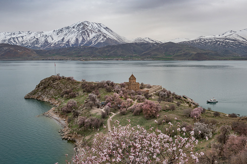 Akdamar Island「Akdamar church in spring, blossoming almond trees, Akdamar island, Lake Van, Eastern Turkey」:スマホ壁紙(16)