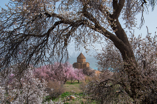 Akdamar Island「Akdamar church in spring, blossoming almond trees, Akdamar island, Lake Van, Eastern Turkey」:スマホ壁紙(13)