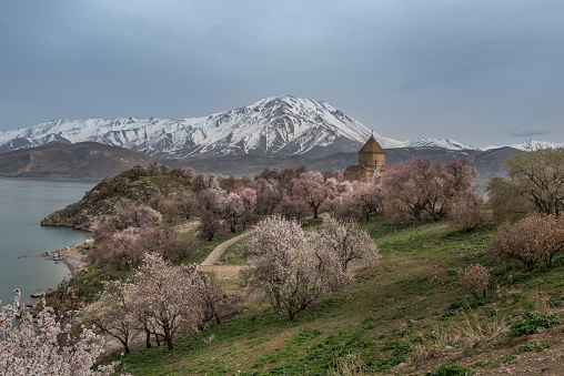 Akdamar Island「Akdamar church in spring, blossoming almond trees, Akdamar island, Lake Van, Eastern Turkey」:スマホ壁紙(12)