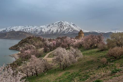 Akdamar Island「Akdamar church in spring, blossoming almond trees, Akdamar island, Lake Van, Eastern Turkey」:スマホ壁紙(14)