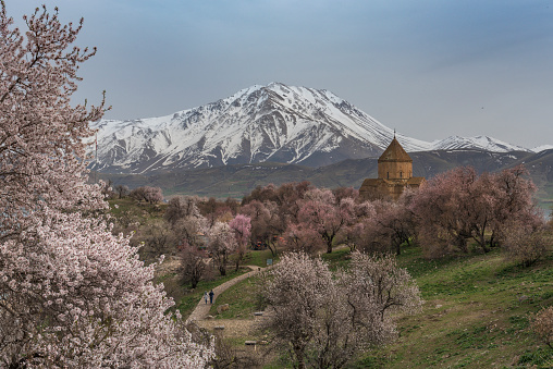 Akdamar Island「Akdamar church in spring, blossoming almond trees, Akdamar island, Lake Van, Eastern Turkey」:スマホ壁紙(12)