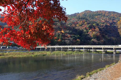 Japanese Maple「Foliage at Arashiyama, Kyoto Prefecture, Honshu, Japan」:スマホ壁紙(7)